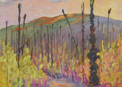 An Old Burn, Yukon
